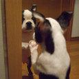 鏡のボク、お友達です。